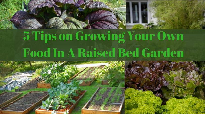 5 Tips on Growing Your Own Food In A Raised Bed Garden