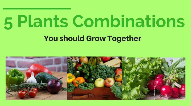 5 Plants Combinations you should Grow Together