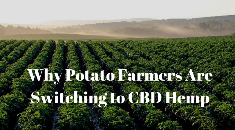 Why Potato Farmers Are Switching to CBD Hemp
