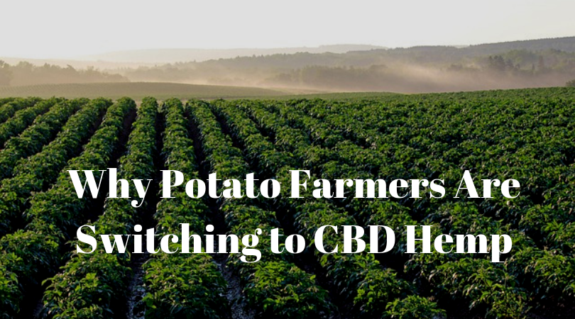 Why Potato Farmers Are Switching to CBD Hemp