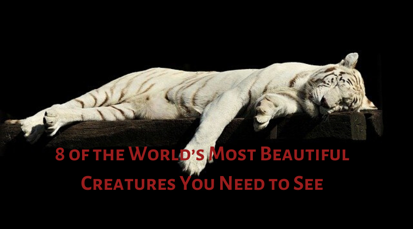 8 of the World's Most Beautiful Creatures You Need to See