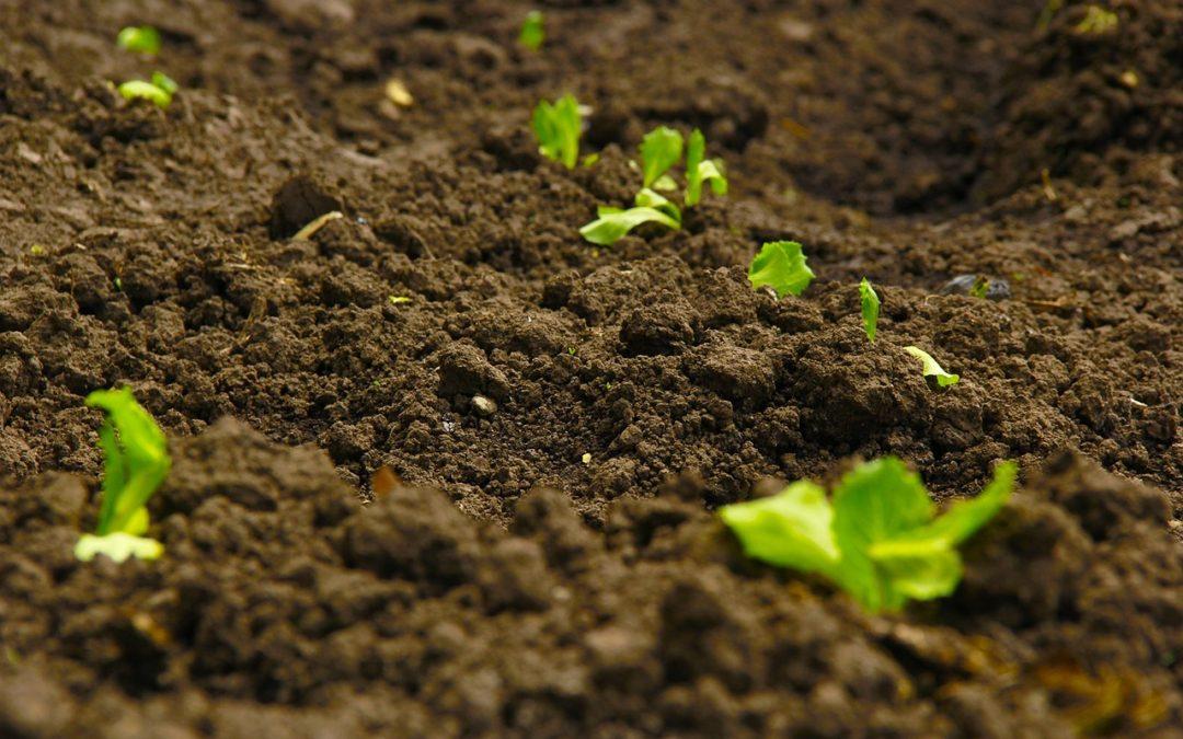 Organic Matter Rich Soil is a Healthy Living Soil