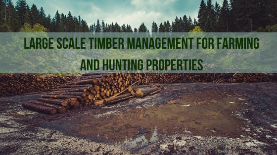 Large Scale Timber Management for Farming and Hunting Properties