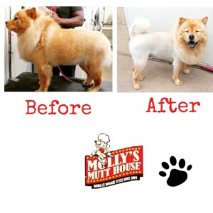 Molly's Mutt House Grooming