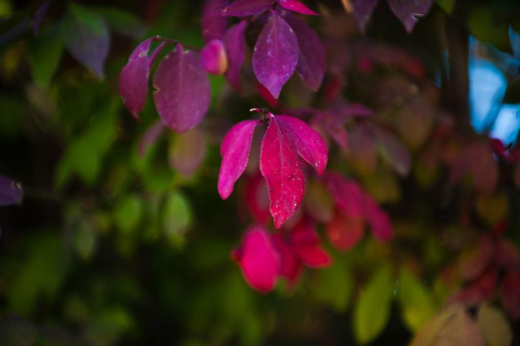 autumnbearsears5