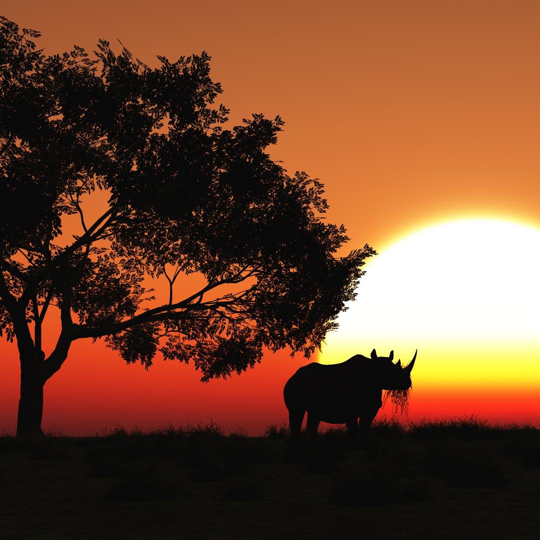 Africa Safari Team Race 2020