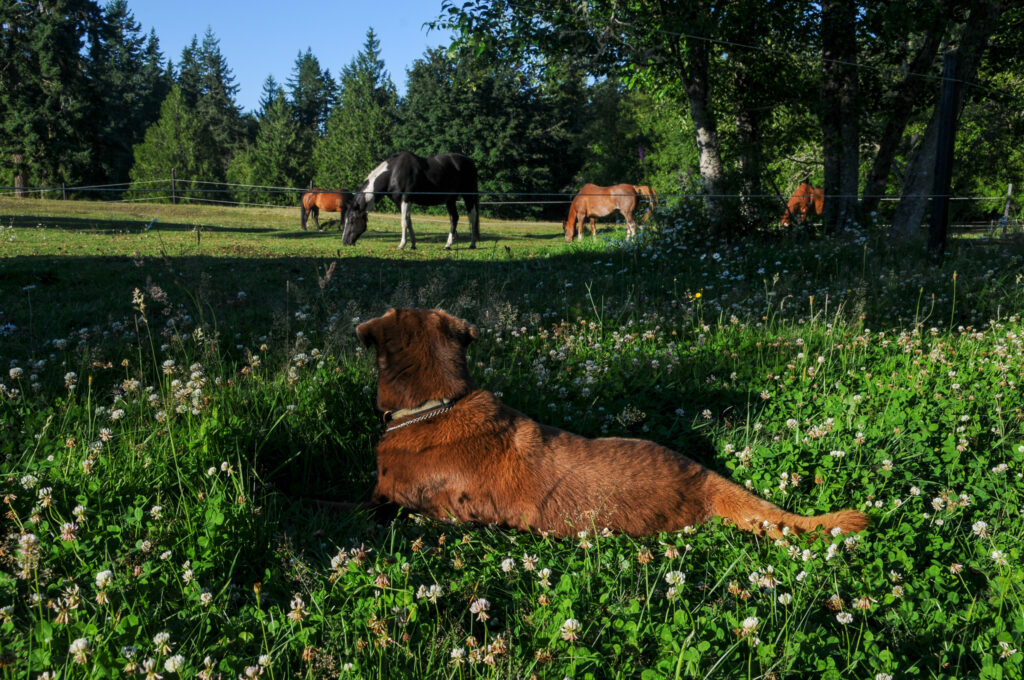 Toohey watching horses