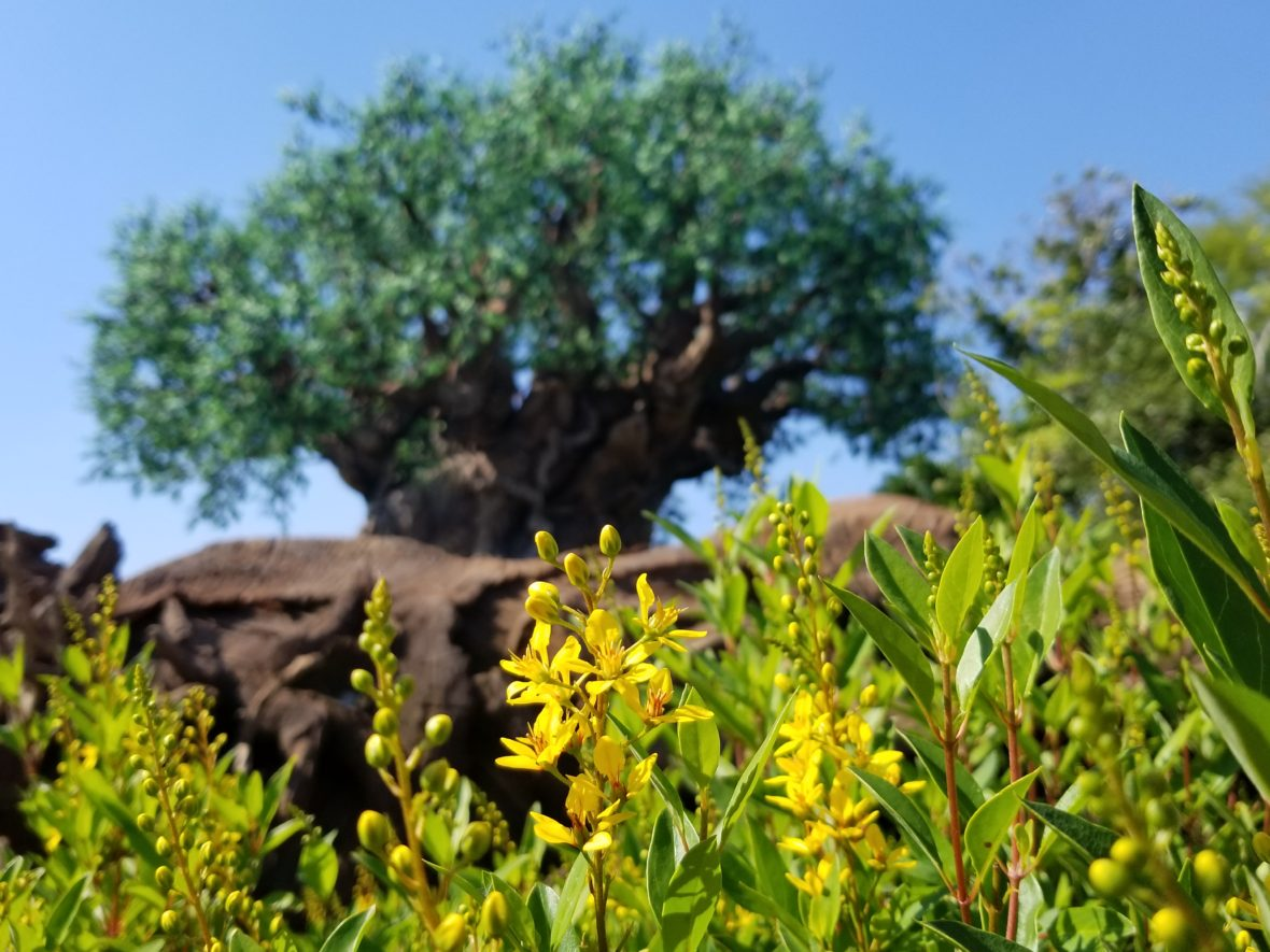 Small yellow flowers growing next to the Tree of Life in Animal Kingdom