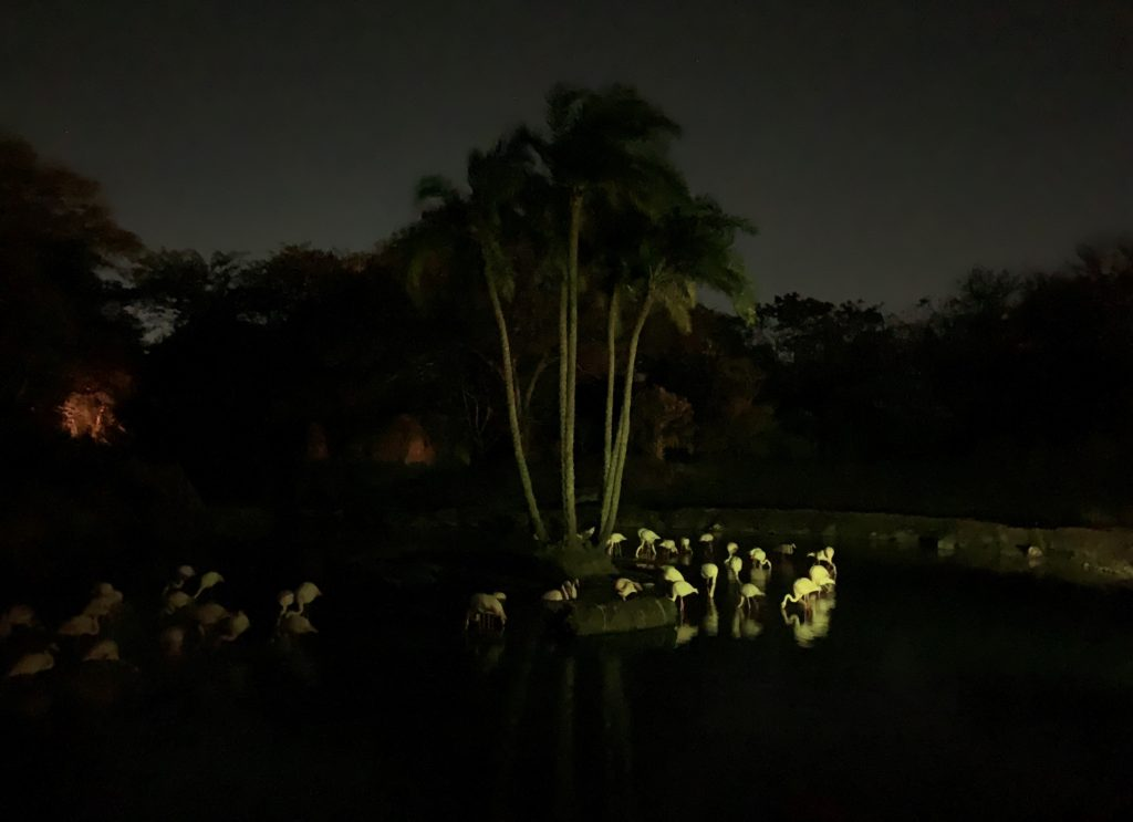 Flamingos on Kilimanjaro Safaris during DVC Moonlight Magic 2020
