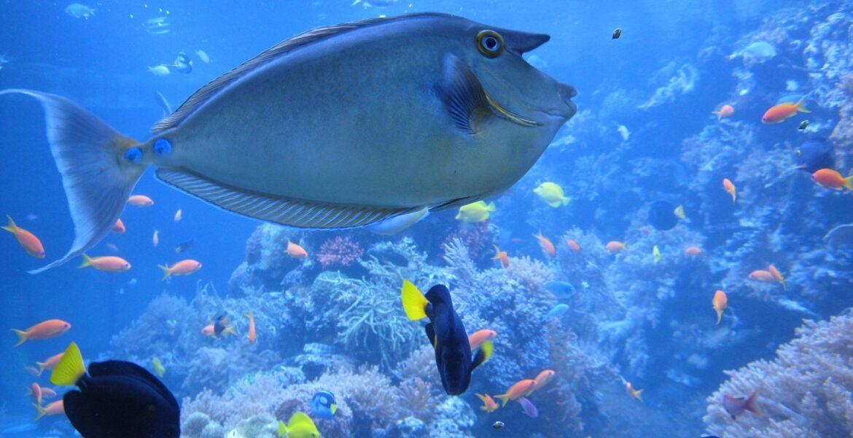 seaquarium fish