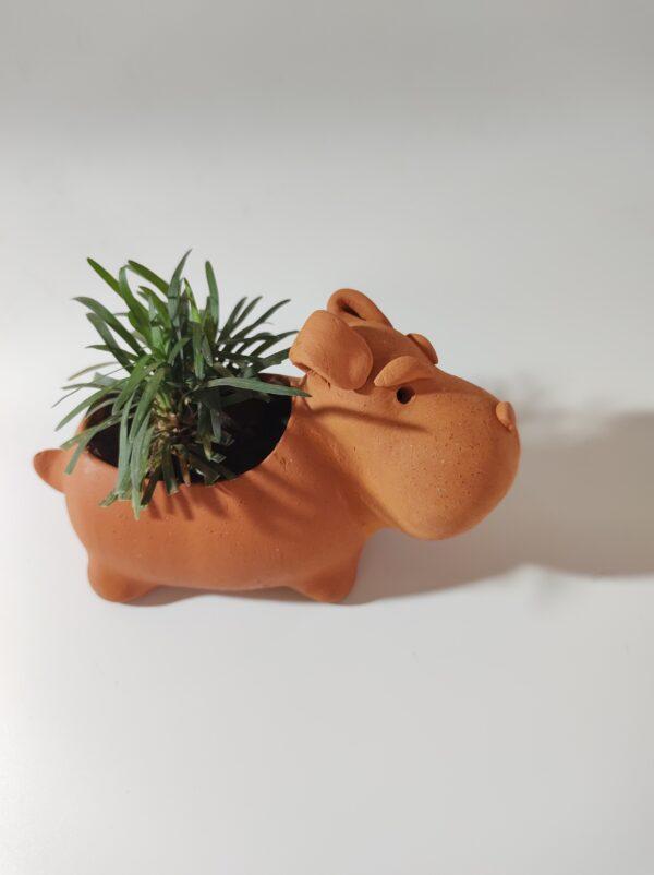 Teracotta Dog planter with Mondo grass