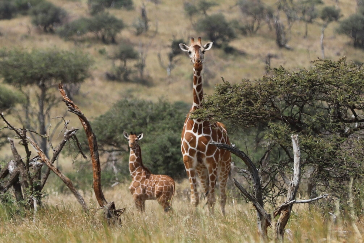 If experiencing an Africa safari with your family is on your bucket list, then this post is for you. I am sharing details about our fabulous trip!