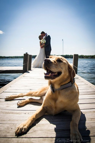 Dog in Wedding Photo