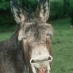 Is That a Donkey on Your Back?