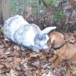 A Tale of Two Rabbits (and an Annoying Daschund)