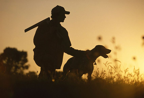 Heat Stress Hunting Dogs