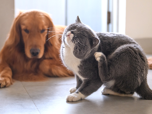 Pet Allergy & Itch Relief