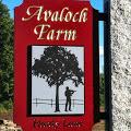 Avaloch Farm Music Institute 1
