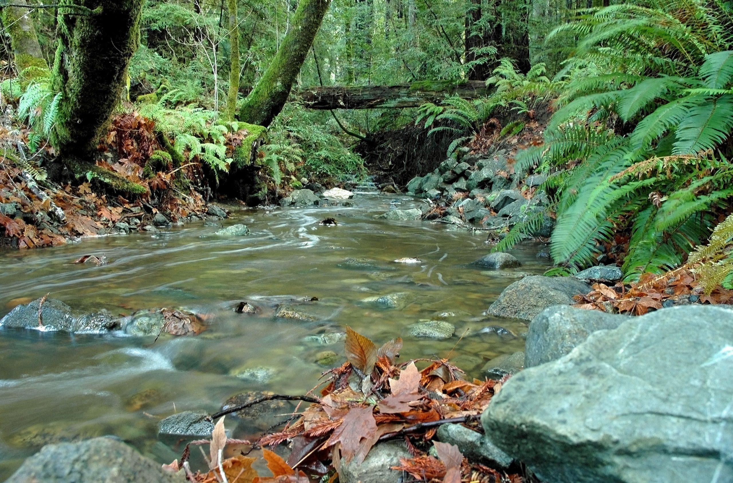 Creek Restoration and Permitting
