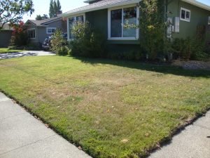 front yard lawn