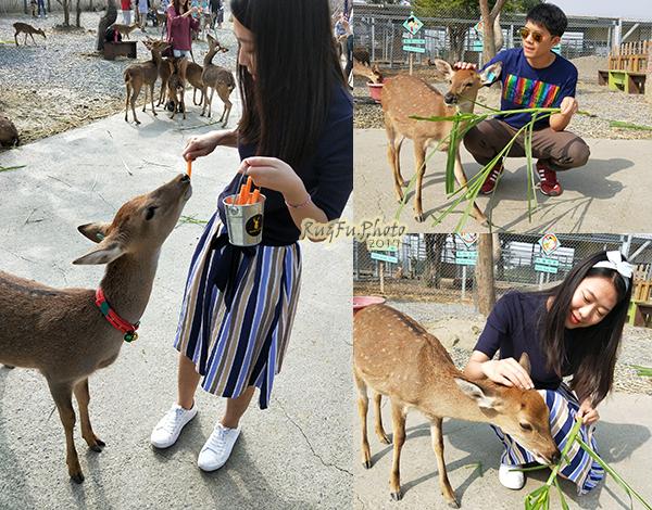 圖片-餵鹿