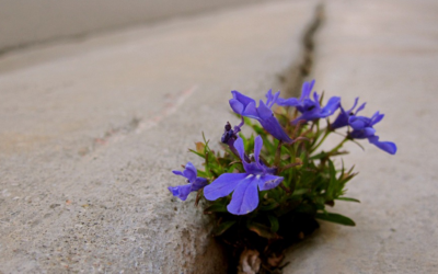 Cultivating Resilience During Difficult Times