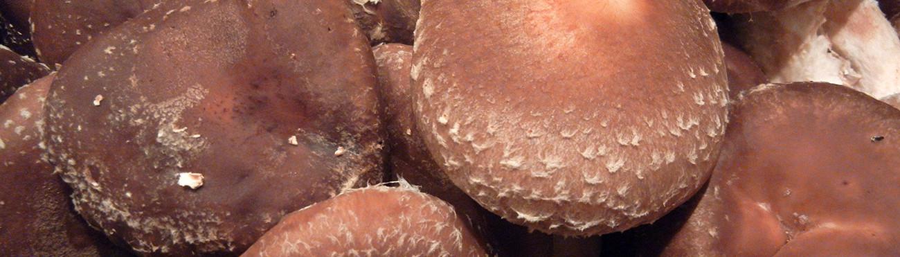 Adam's Mushrooms