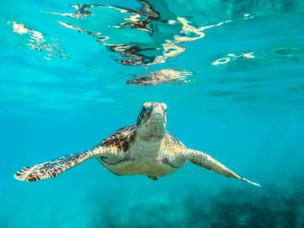 sea turtle hospital marathon florida key