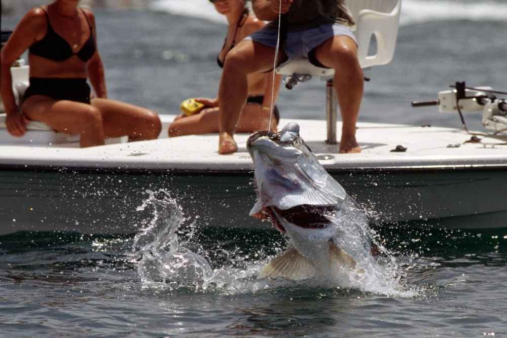 Man reeling in a tarpon fish from a boat in the Florida Keys