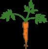 Carrot-e1587534276100