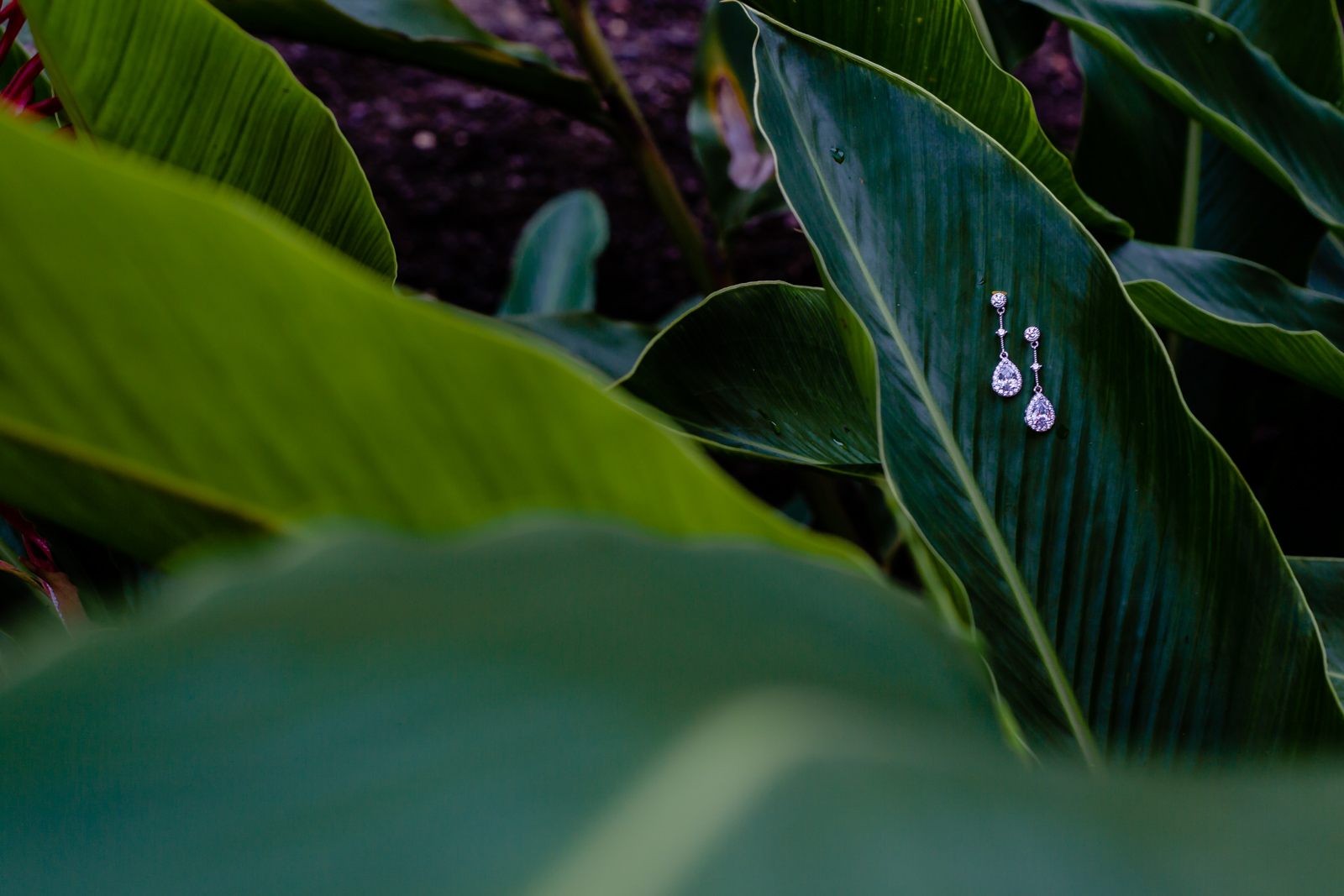 earrings on a green leaf on the garden
