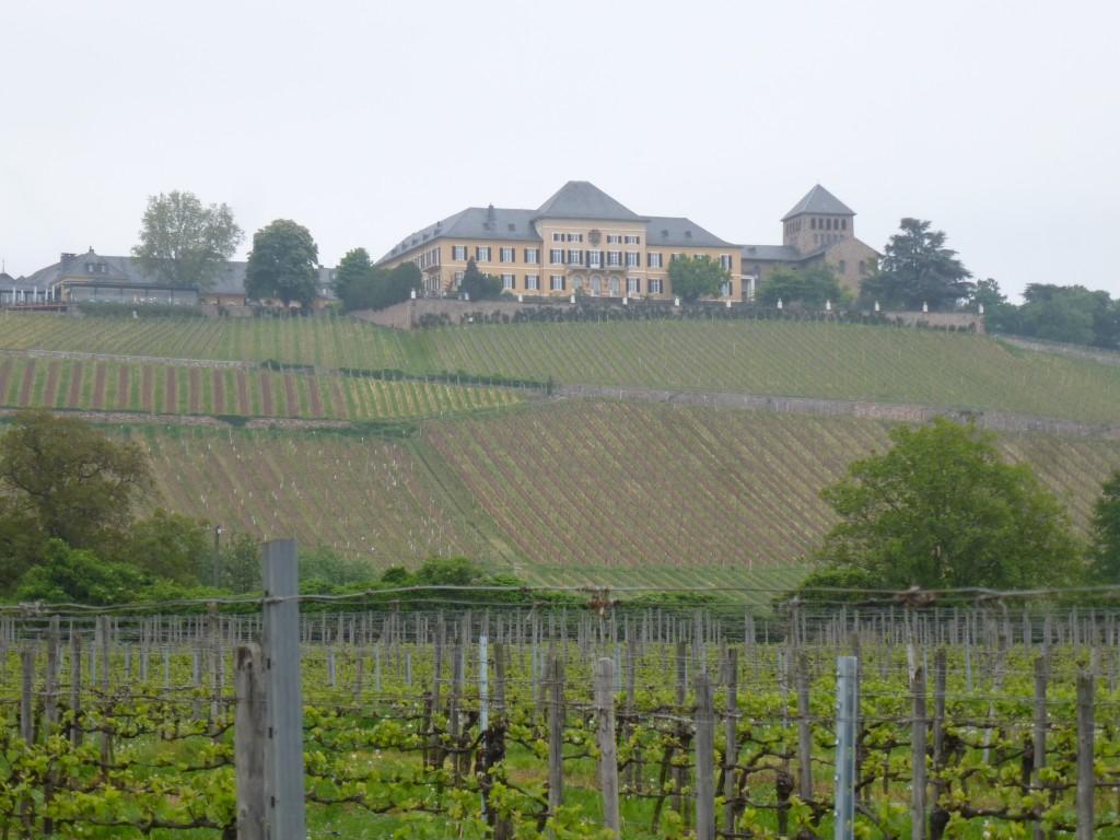 Wine tasting in the Rheingau