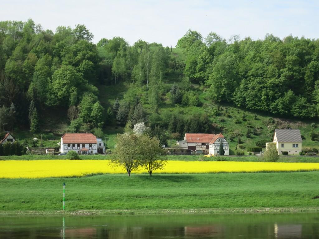 Rapeseed field near Meissen