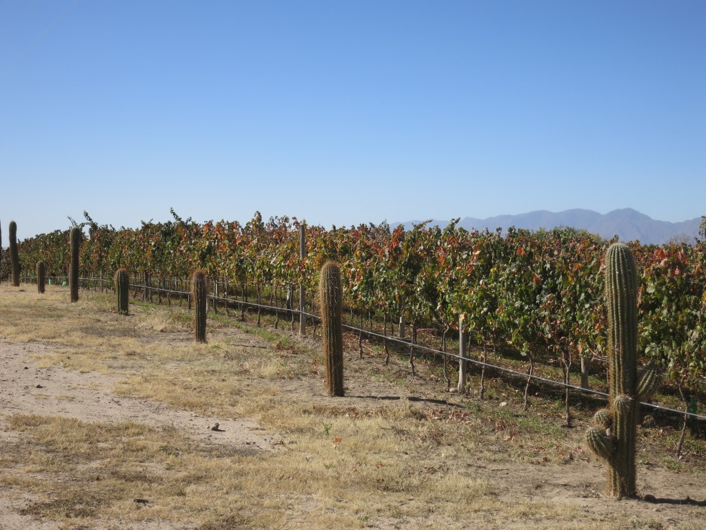 Vineyards at Piattelli