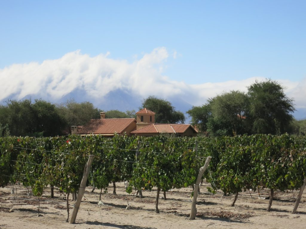 Vineyards at Estancia de Cafayate
