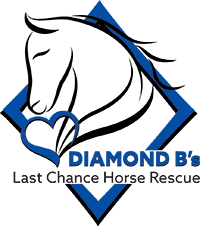 Diamond B's Horse Rescue