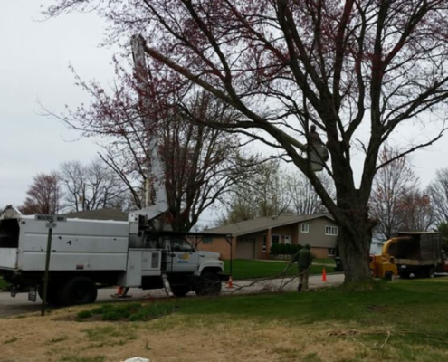 kellys-tree-services-removal-in-evansville-in