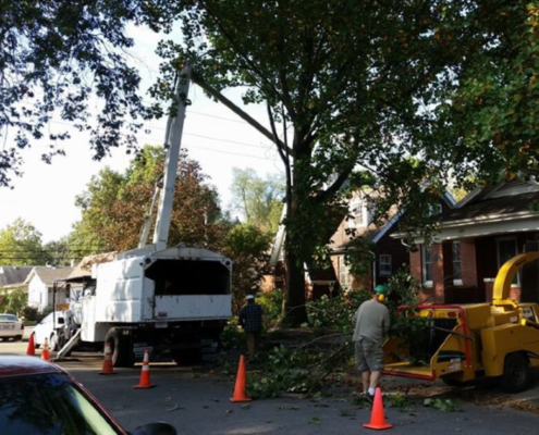 tree-services-removal-grinding-in-evansville-in