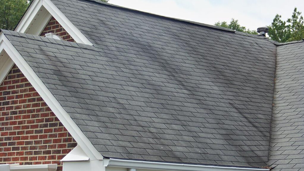 How to Clean Algae and Moss Off Asphalt Shingles