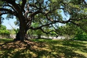 4379 W US Hwy 290 TreesB