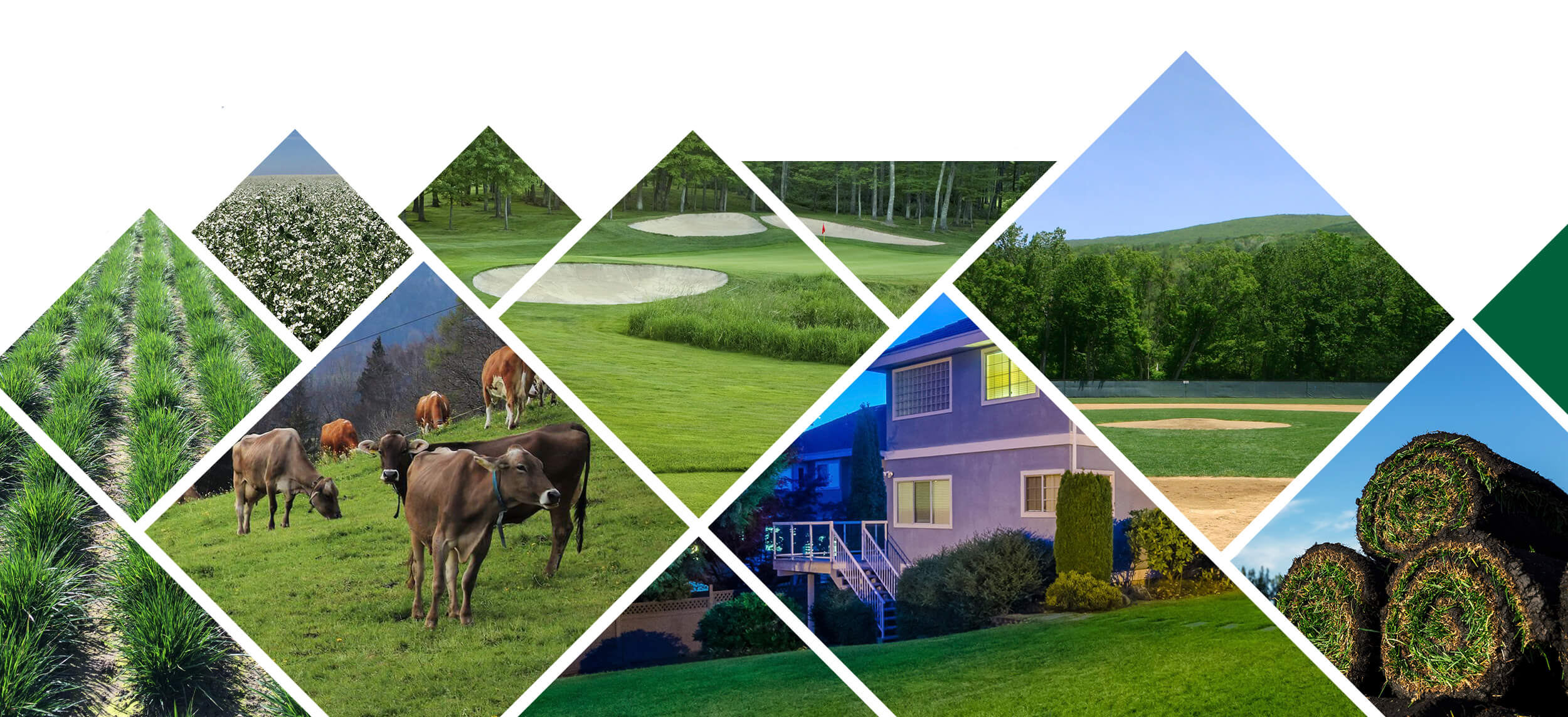 Photo collage with images with grass