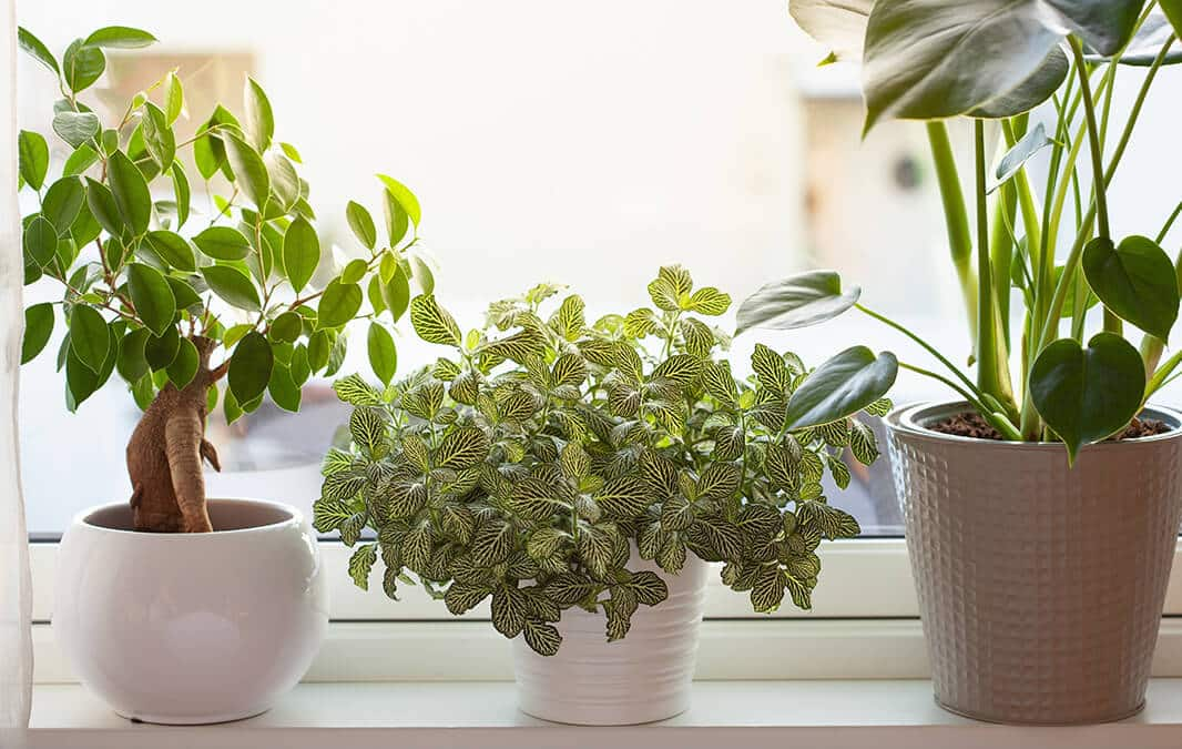 Different kinds of indoor green plants