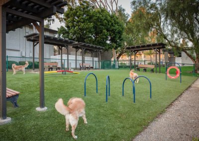 Dog park with games and grass