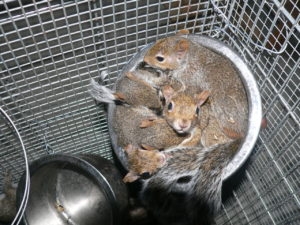 bowl of squirrels