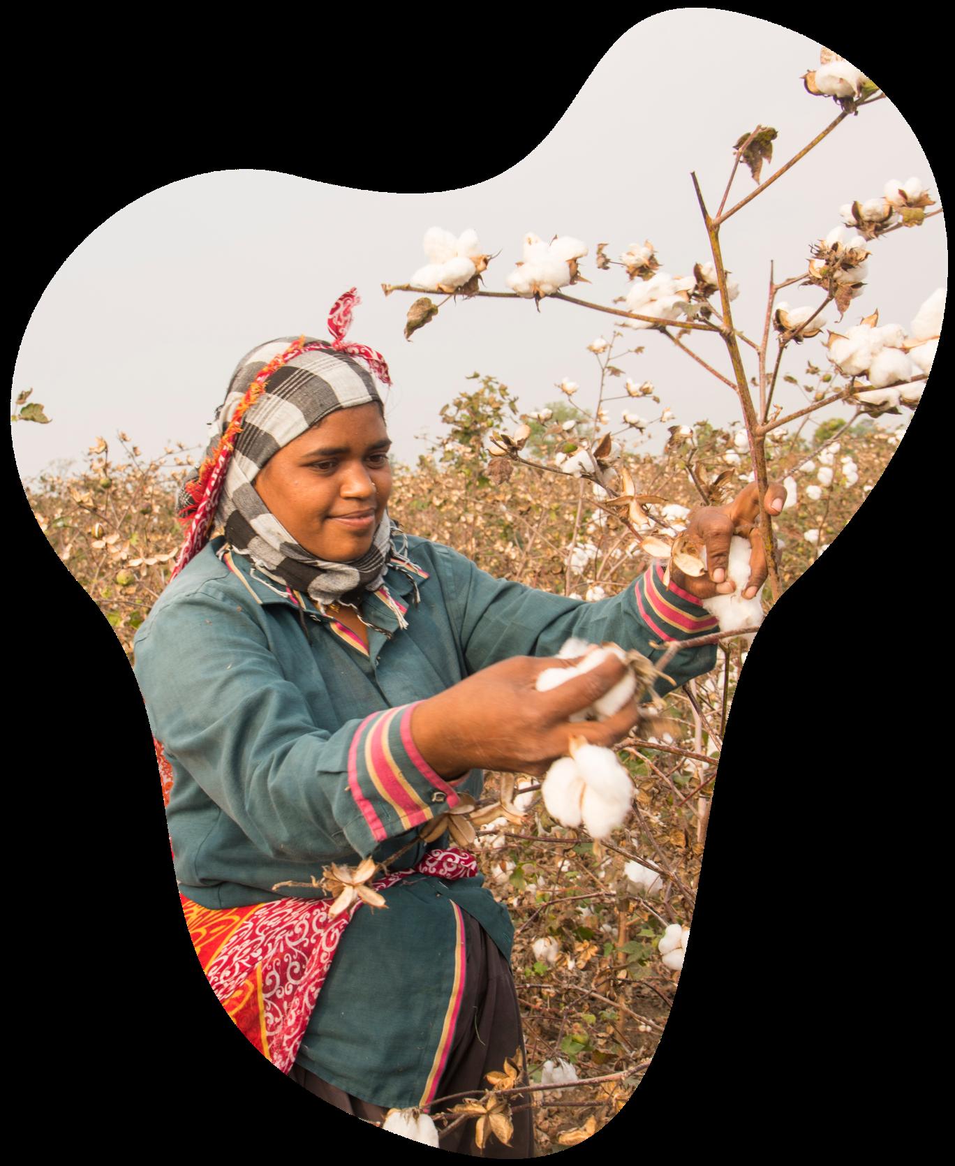 Woman cotton farming