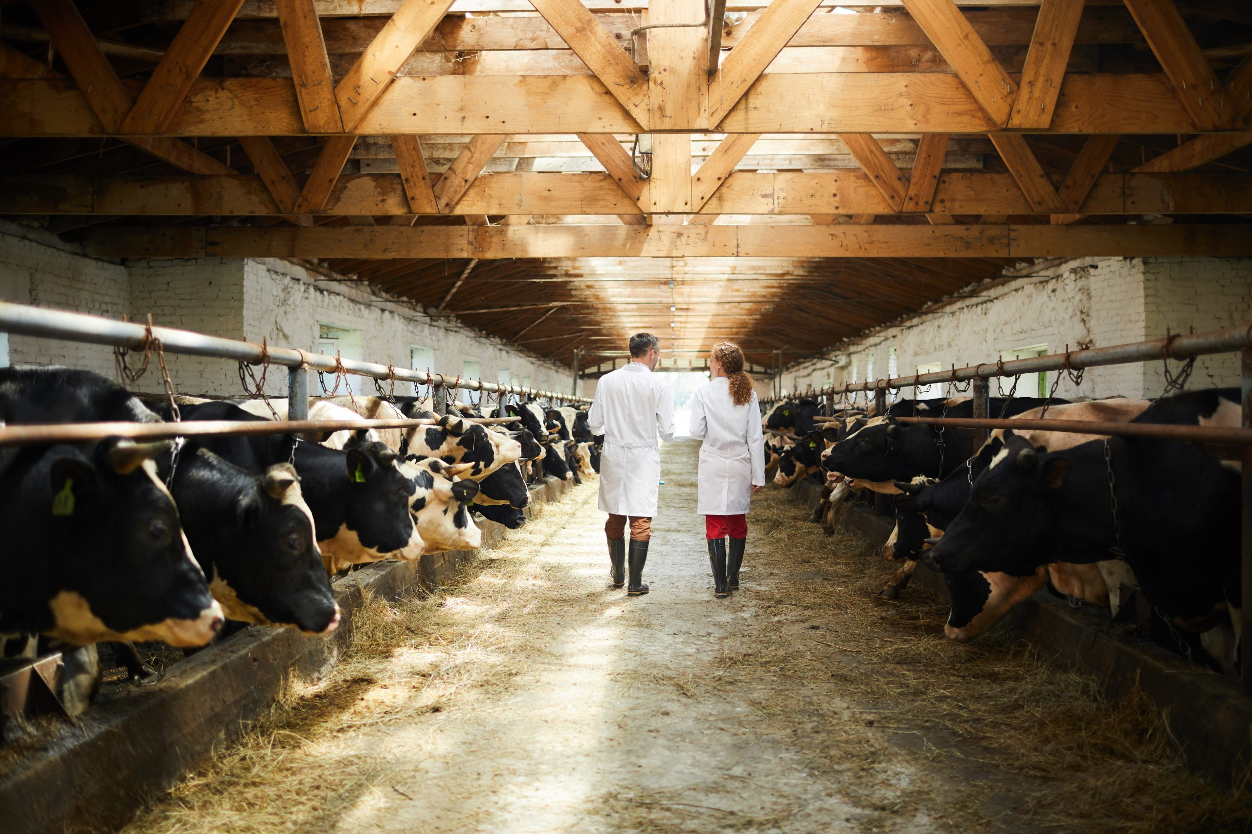 The meatpacking industry: Managing a COVID-19 ravaged workplace