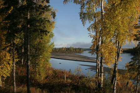 Lake and the trees