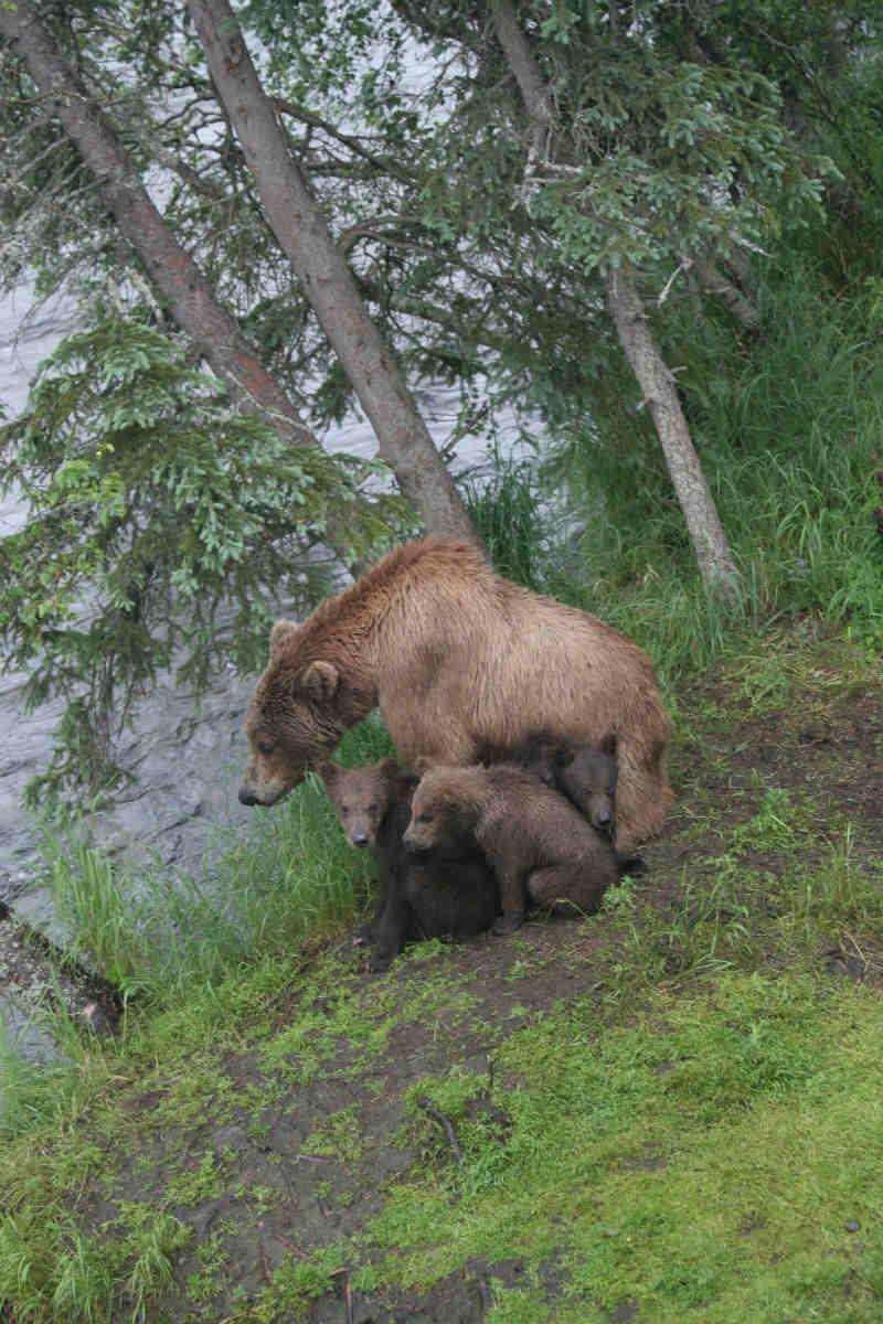 A family of bears near the trees