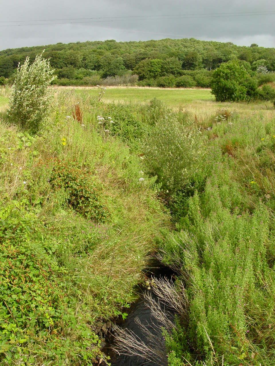 Ireland, Mayo, Ardygommon brook