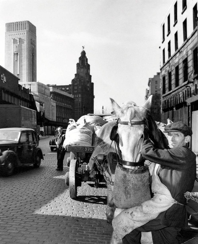 Liverpool carter feeding horse
